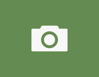 Carpinus betulus 'Frans Fontaine' voorgeleid
