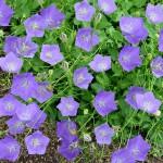 Wanneer en hoe plant ik mijn vaste planten?