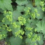 Ik wil graag bodembedekkers in mijn tuin. Welke planten zijn hiervoor geschikt? (INFOBROCHURE)