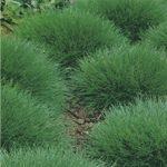 Siergrassen planten, kies de juiste standplaats.