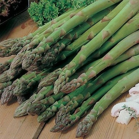 Asparagus officinalis 'Mary Washington' - groene asperge