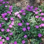 Heeft u informatie over vaste planten?