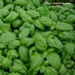 Kruiden planten voor gebruik in de keuken.