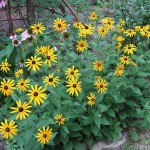 Een uitgebreid assortiment vaste planten aan een vaste lage prijs.