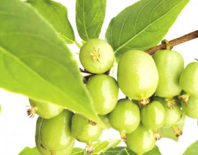 Mini-kiwi pot