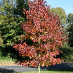 Hoe kies ik een boom? Heeft u informatie over bomen?