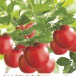 Fruitbomen planten voor je eigen fruitboomkwekerij.