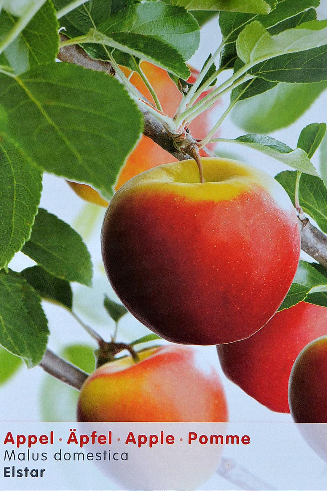 Bekend Ik wil graag fruitbomen in mijn tuin. Hoe maak ik de juiste keuze  @AE66
