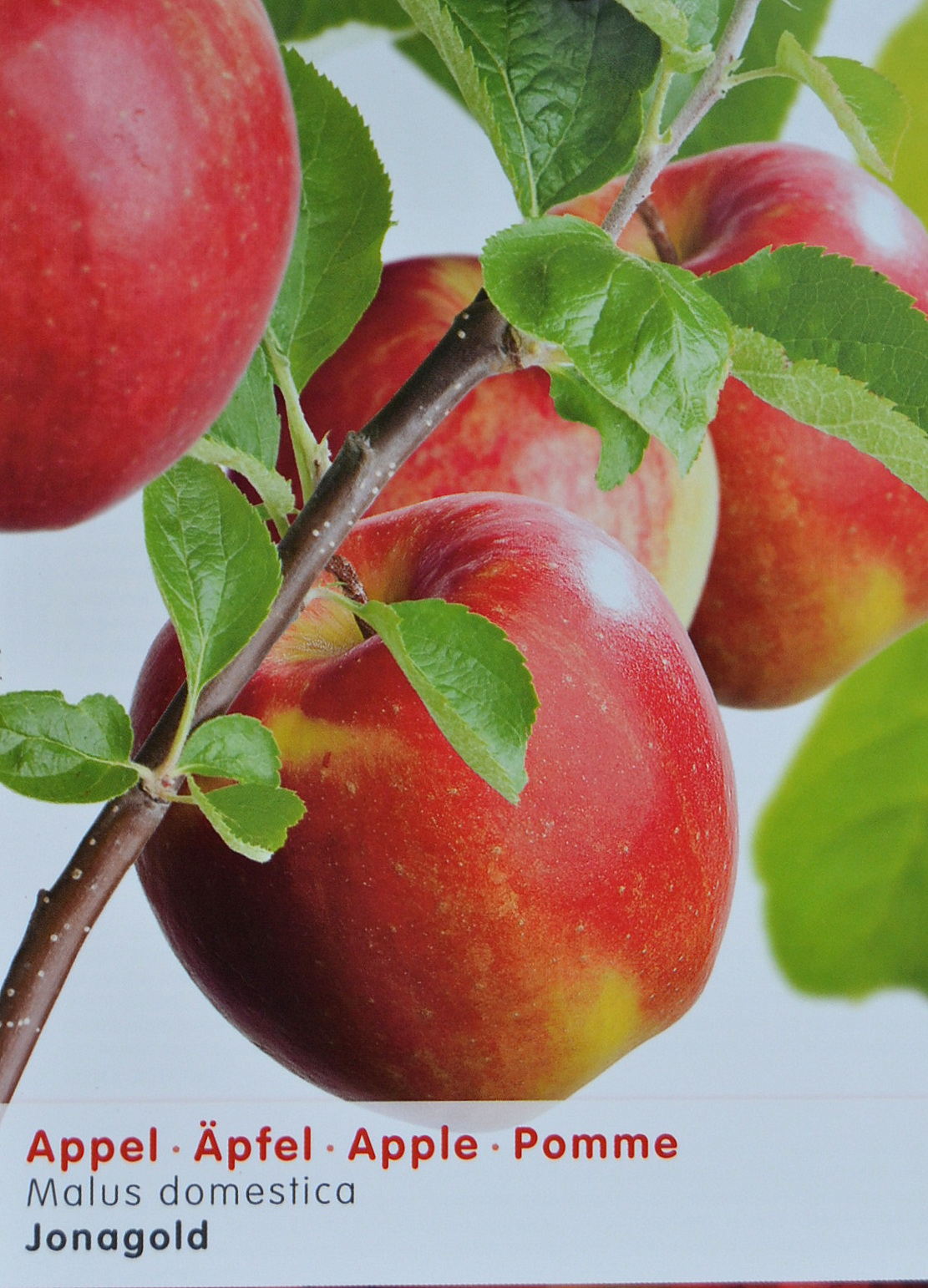 goedkope appelbomen