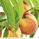 Ik wil graag fruitbomen in mijn tuin. Hoe maak ik de juiste keuze?