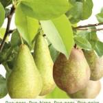 Op welke onderstammen staan jullie fruitbomen?