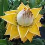 Heeft u informatie over mediterrane planten?