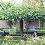Hoe plant ik dakbomen? Hoe kies ik een dakvormige boom?