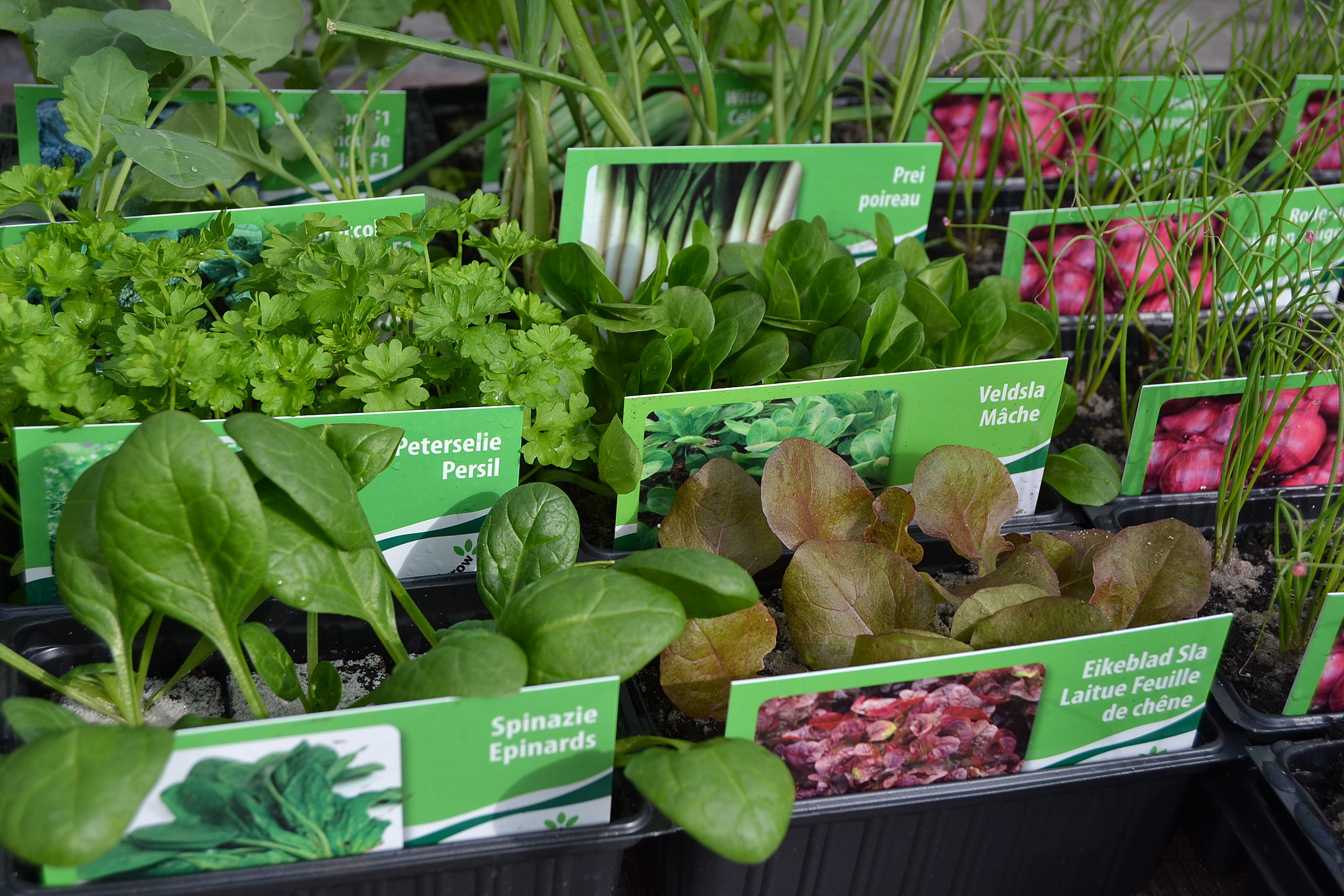 groenten met perskluitjes.