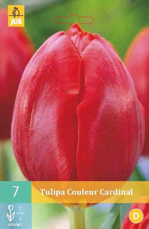 Tulipa 'Couleur Cardinal' - tulp