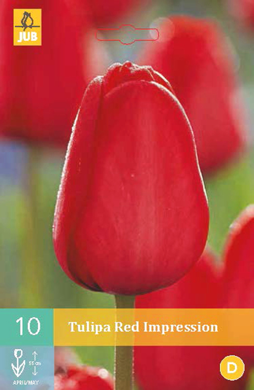Tulipa 'Red Impression' - tulp