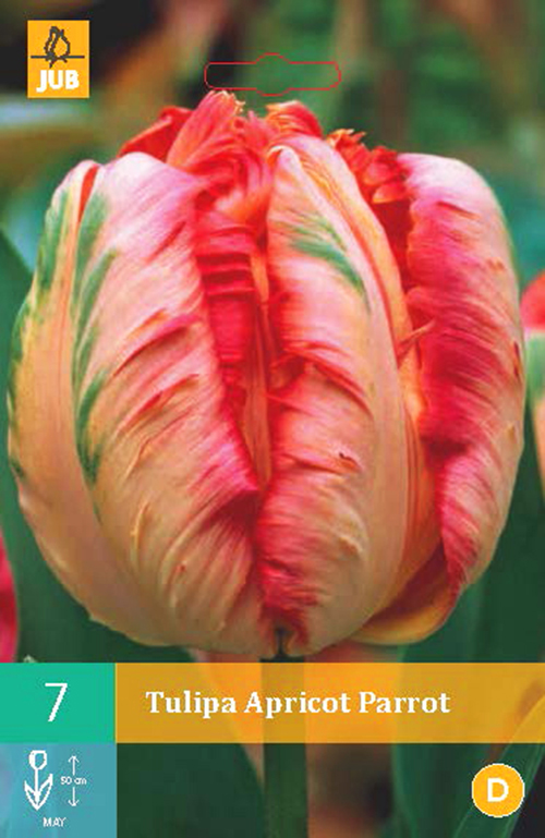 Tulipa 'Apricot Parrot' - tulp
