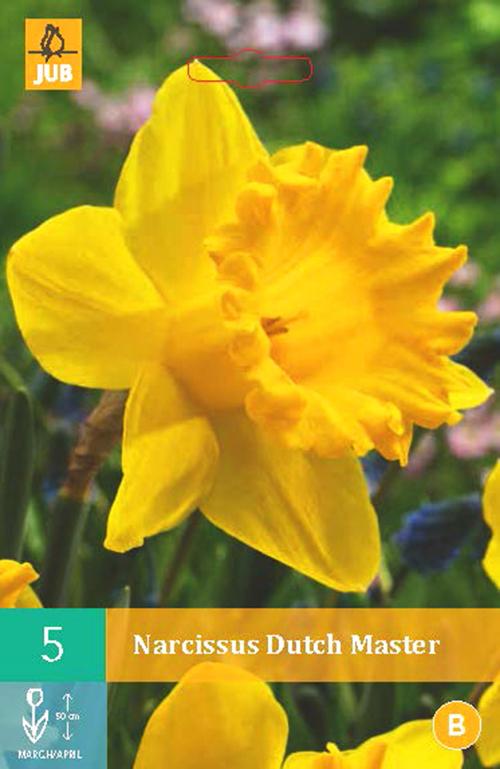 Narcissus 'Dutch Master' - paasbloem
