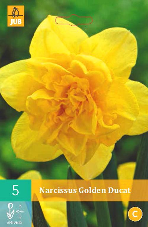 Narcissus 'Golden Ducat' - paasbloem