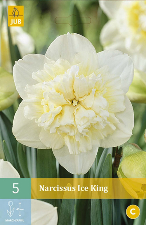 Narcissus 'Ice King' - paasbloem