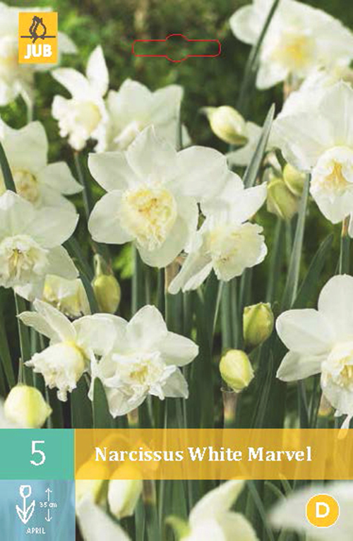 Narcissus 'White Marvel' - paasbloem