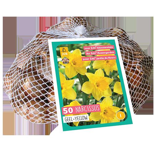 Narcissus geel XXL - paasbloem
