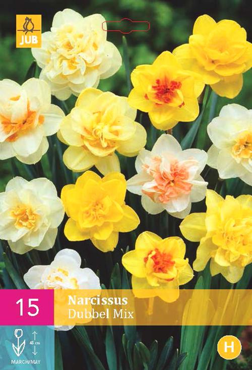 Narcissus 'Dubbel Mix'  XXL - paasbloem