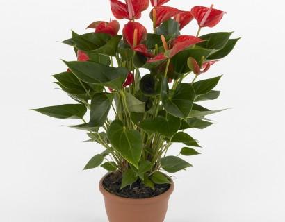 Kamerplanten (momenteel géén aanbod)