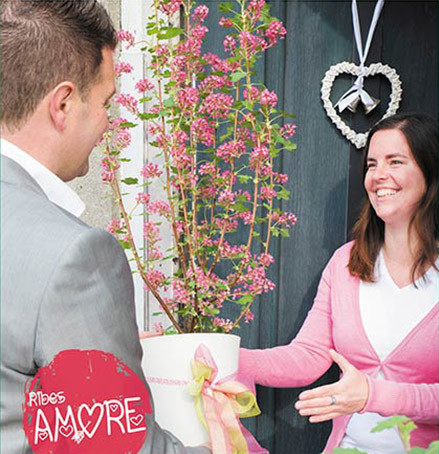 Ribes sanguineum 'Amore' - Sierbes