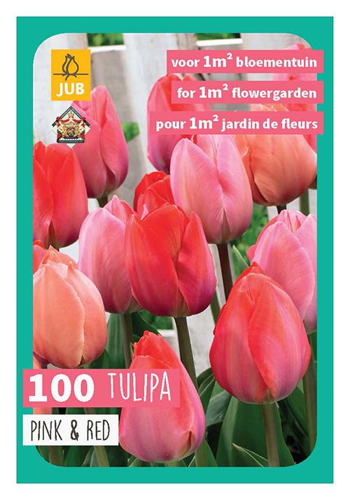 Tulipa 'Roze/Rood' XXL - Tulp