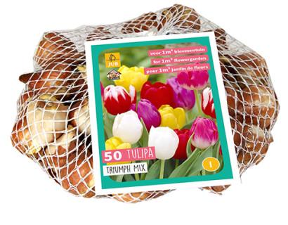 Tulipa 'Triumph Mix'  XXL - Tulp