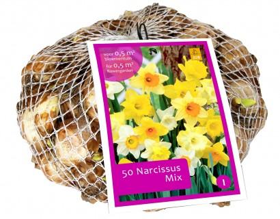 Narcissus 'Mix' - Tulp