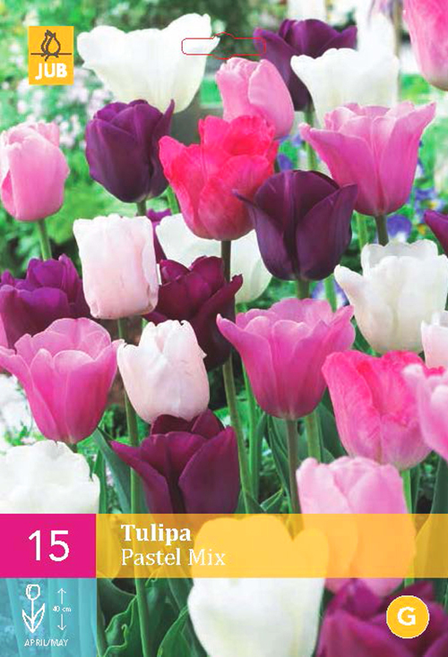 Tulipa 'Pastel Mix'  XXL - Tulp