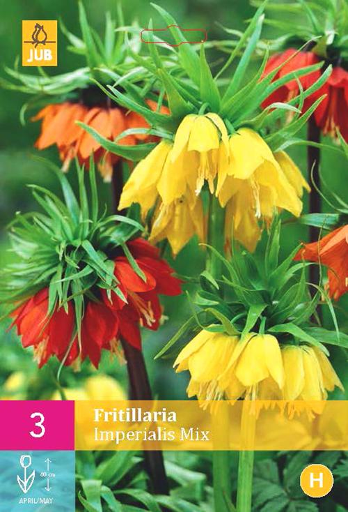 Fritillaria imperialis 'Mix'  XXL - Keizerskroon