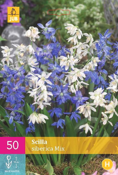 Scilla siberica 'Mix' XXL - Oosterse Sterhyacint