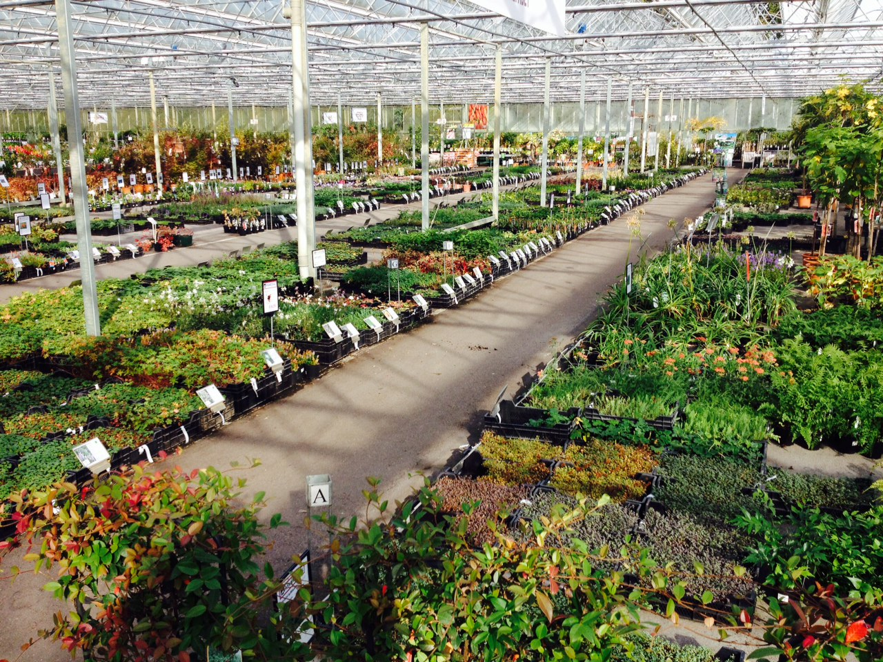 vaste planten tuincentrum