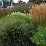 Wanneer siergrassen planten: toepassing, onderhoud.