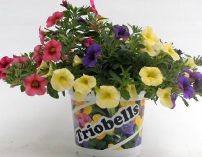 Million Bells tricolor pot - Franse geranium