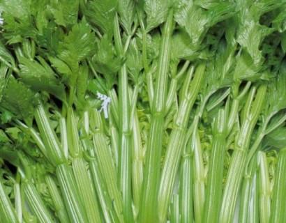 Groene selder - aardbei