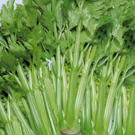 Groene selder -
