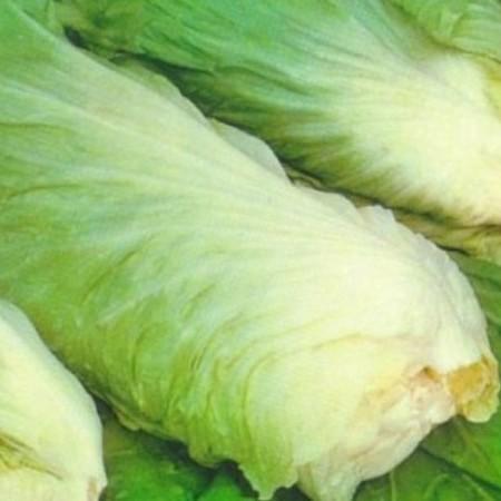 Suikerbrood of groenlof -