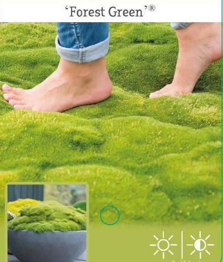 Match & Moss 'Forest Green' - mos