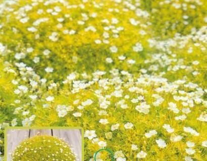 Match & Moss 'Lime Green' - mos