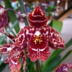 Dcm, de juiste bemesting, potgrond en substraat voor je orchidee!