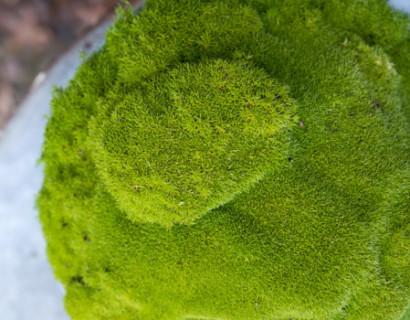 Match & Moss 'Olive Green' - mos