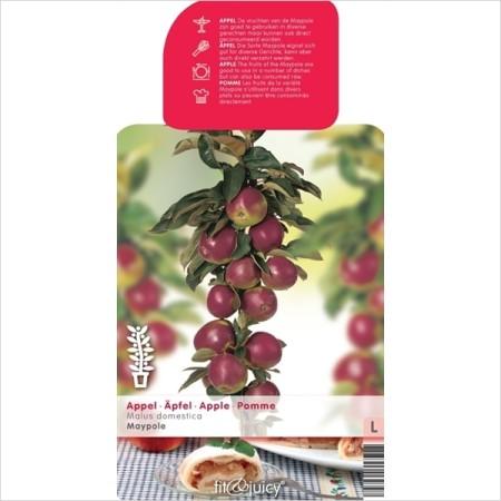 Malus domestica 'Maypole' Ballerina zuilboom - Zuilvormige appelboom, Ballerina appelboom
