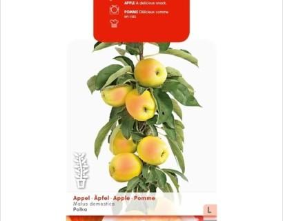 Malus domestica 'Polka' Ballerina zuilboom - zuilvormige appelboom, Ballerina appelboom