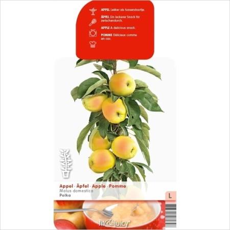 Malus domestica 'Polka' - zuilvormige appelboom, Ballerina appelboom