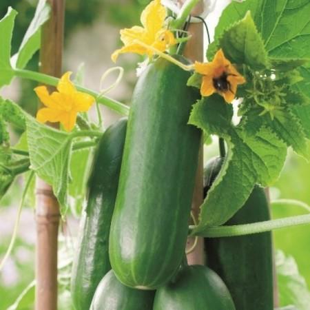 Geënte snack komkommer -
