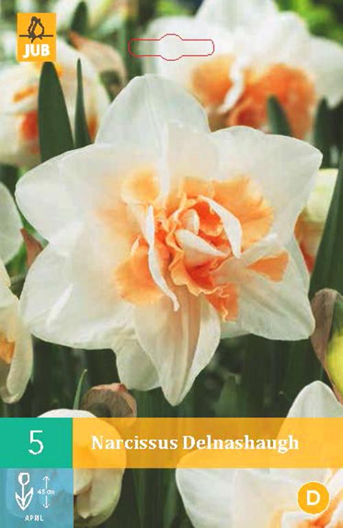 Narcissus 'Delnashaugh' - paasbloem